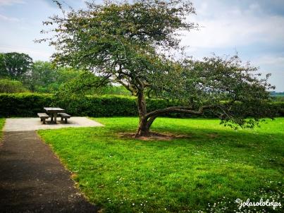 Photo_1555966742151